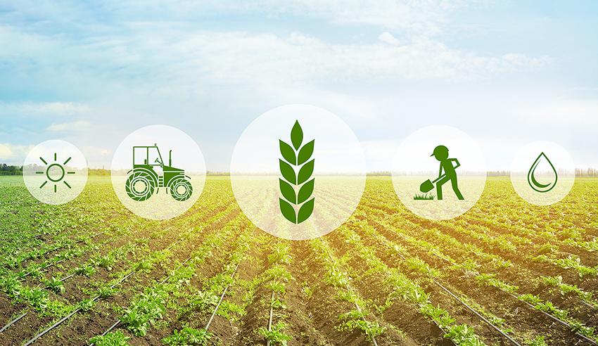 برنامه خود اشتغالی کشاورزی AINP